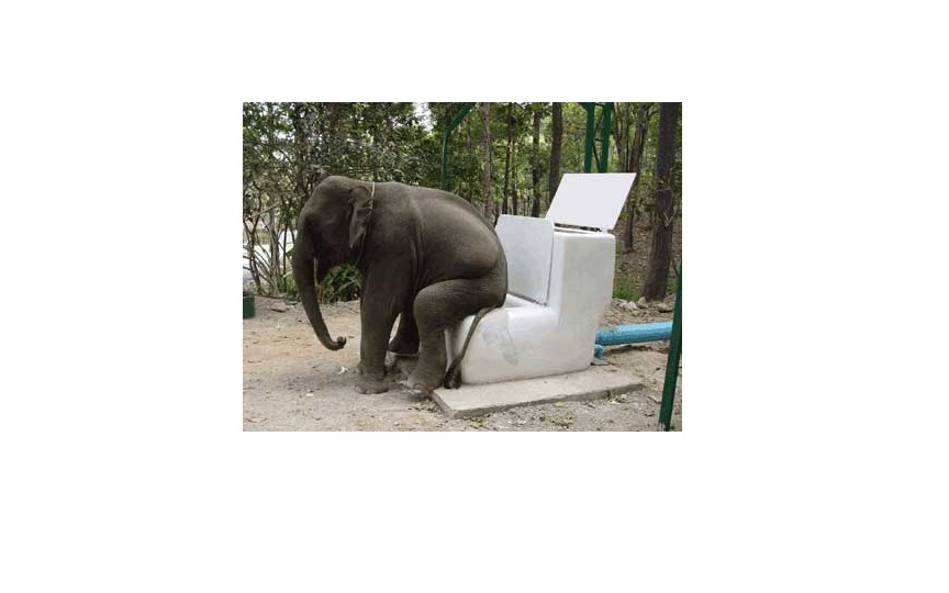 Frozen In A Land Of Elephant Toilets And Unlimited Kale